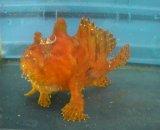 カエルアンコウ(約14センチ前後)橙系