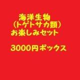 海洋生物類(トゲトサカ類)お楽しみセット(3000)