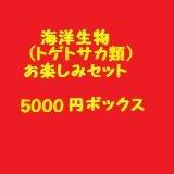 海洋生物類(トゲトサカ類)お楽しみセット(5000)