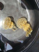 タコクラゲ ベビーサイズ・・2匹セット