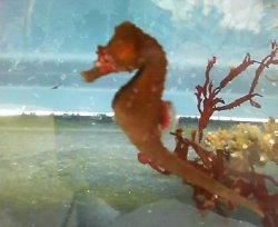画像1: ハナタツ・・赤色素血統