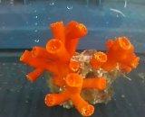 エントウキサンゴ