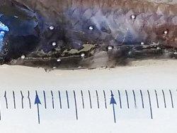 画像2: 《近海産深海魚》ハダカイワシ科の1種(冷凍個体)