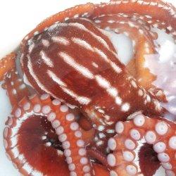 画像1: 《近海産甲殻類》☆★綺麗☆★シマダコ…ハンドコート採取